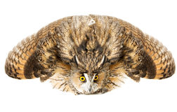 Owl Stock Photo