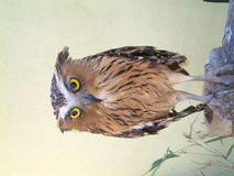 Owl. A closeup view of an owl royalty free stock photos