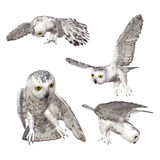 Owl. Digital animal for your artistic creations and/or projects Stock Image