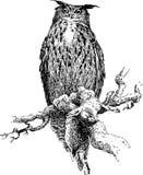 Owl. Stock Photos