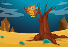 An owl above a tree Royalty Free Stock Photo