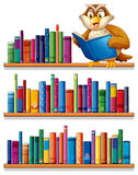 An owl above the wooden bookshelves with books. Illustration of an owl above the wooden bookshelves with books on a white background royalty free illustration