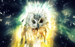 Owl, abstract animal concept Stock Photography