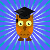 Owl in an academic cap on a blue background with divergent rays. Blue background Stock Photos