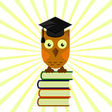 Owl in the academic cap sitting on a pile of books, graduation Stock Photos