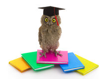 Owl Stock Photos