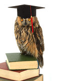 Owl. In academic cap on a white background Stock Images
