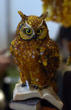 Owl Amber Royalty Free Stock Photography