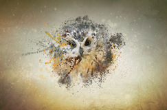 Owl, animal concept. Owl concept. Can be used for wallpaper, canvas print, decoration, banner, t-shirt graphic, advertising Royalty Free Stock Photo