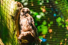 Owl in the aviary. Owl on the background of the aviary grid stock image