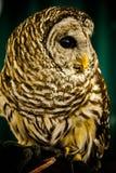 Owl Aware Stock Image
