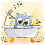 Owl in the bathroom Royalty Free Stock Photo