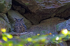 Owl. In the bavarian forest Stock Photo