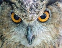 Owl be watching you Stock Photos