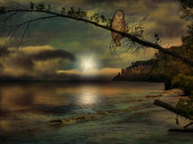 Owl on beach scene. Owl on beach in the evening depiction Royalty Free Stock Photography