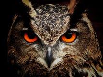 Owl, Beak, Bird Of Prey, Fauna royalty free stock photography