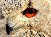 Owl, Beak, Fauna, Bird Of Prey royalty free stock photos