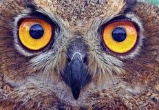 Owl, Beak, Fauna, Bird Of Prey Royalty Free Stock Image
