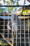 Owl. In the Berlin zoo Stock Photo