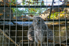 Owl. In the Berlin zoo Royalty Free Stock Photography