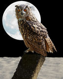 Owl. An owl with big full moon on the back Royalty Free Stock Images