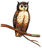 Owl bird Royalty Free Stock Photography