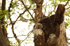 Owl. Bird animal cute background wallpaper life stock photography