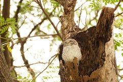 Owl. Bird animal widelife life nature wallpaper background royalty free stock photos