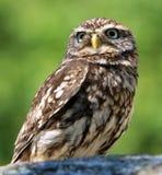 Owl, Bird, Beak, Bird Of Prey Stock Photo