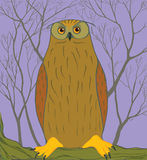 Owl in the vector illustration