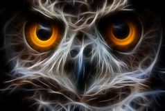 Owl Bird Face Close Up Stock Image
