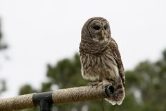 Owl, Bird, Fauna, Beak stock images