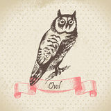 Owl bird, hand-drawn illustration Stock Photography