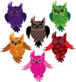 Owl bird set Royalty Free Stock Photography