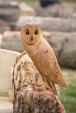 Owl bird Stock Photos