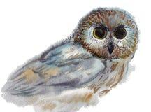 Owl, bird, watercolor, sketch, paint, animals, illustration Stock Photos