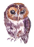 Owl, bird, watercolor, sketch, paint, animals, illustration royalty free stock images