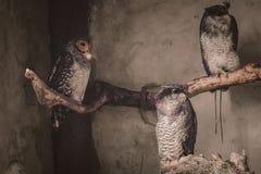 Owl. Birdphotography, cage, animal, forest, night royalty free stock image