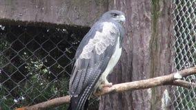 Owl, Birds of Prey, Animals, Wildlife, Nature stock video