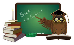 Owl with black board Stock Images