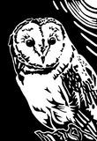 Owl. Black and white barn owl linocut print illustration Royalty Free Stock Photography