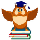 An owl sits on the books Royalty Free Stock Image