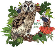 Owl in blooming deciduous forests Royalty Free Stock Photography