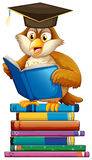 Owl and books Stock Photo