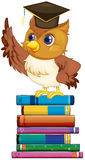 Owl and books Stock Photos