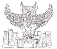 Owl  on books. Stock Photography