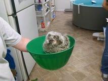 Owl Bowl imagens de stock royalty free