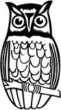 Owl On Branch Stock Image