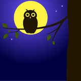 Owl on the branch Royalty Free Stock Photos