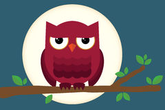 Owl at Night. Owl on branch in front of the moon Royalty Free Stock Photography